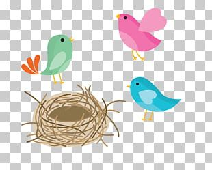 Bird Nest Swallow Bird Nest PNG