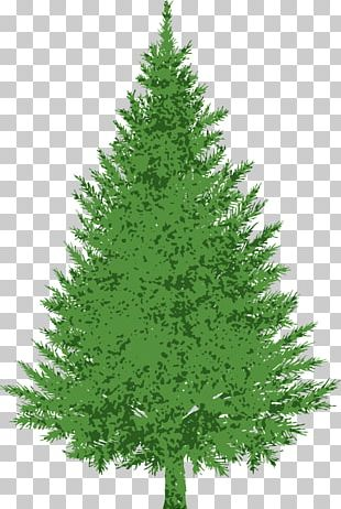 Evergreen Pine PNG