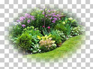 Perennial Garden Design Perennial Garden Plants Shade Garden Perennial Plant PNG