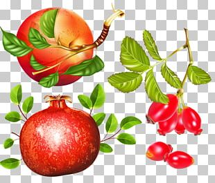 Apple Herb Pomegranate PNG