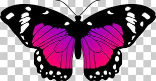 Monarch Butterfly Black And White Drawing PNG