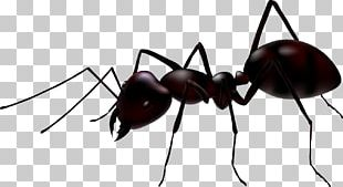 Ant Stock Photography Illustration PNG