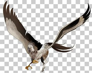 Eagle Vulture Fauna Beak Feather PNG