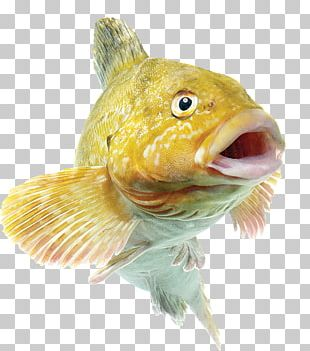Common Carp Fishing Bait Angling PNG