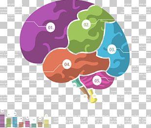 Cerebrum Chart PNG