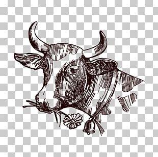 Texas Longhorn Milk Drawing Sketch PNG