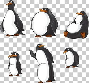 King Penguin Portable Network Graphics PNG