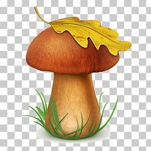 Snow Fungus Poisonous Mushroom Edible Mushroom PNG