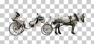 Horse-drawn Vehicle Carriage Horse And Buggy Coach PNG