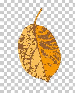 Leaf Yellow Illustration PNG