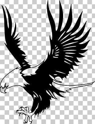 Bald Eagle Just Eagles Black-and-white Hawk-eagle PNG