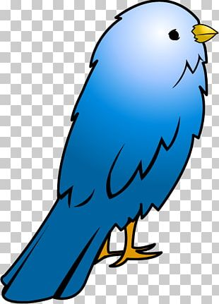 Domestic Canary Big Bird PNG