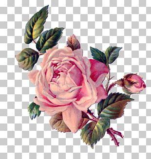 Flower Rose Pink PNG
