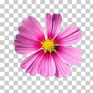 Cut Flowers PNG