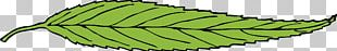 Leaf Computer Icons Portable Network Graphics PNG