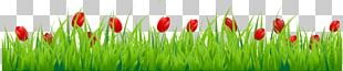 Tulip Flower Stock Photography PNG