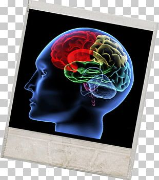 Human Brain Cognition Neuroscience Concept PNG