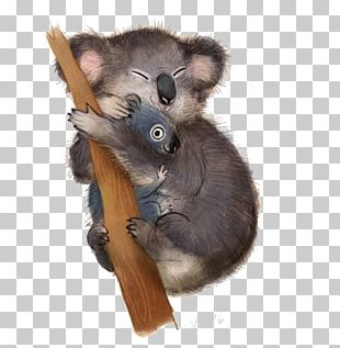 Koala Poster Illustration PNG