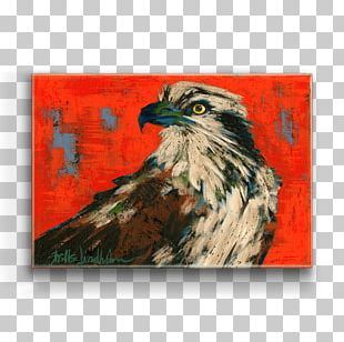 Bald Eagle Hawk Art Bird PNG