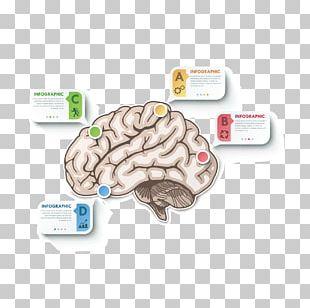 Brain Cerebrum PNG