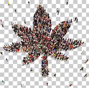 Medical Cannabis California NORML National Organization For The Reform Of Marijuana Laws Cannabis Sativa PNG