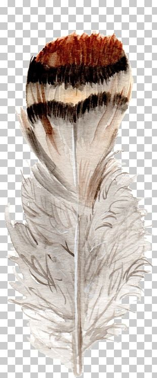 Feather Bird Watercolor Painting PNG