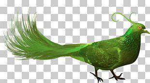 Bird Beak Green PNG
