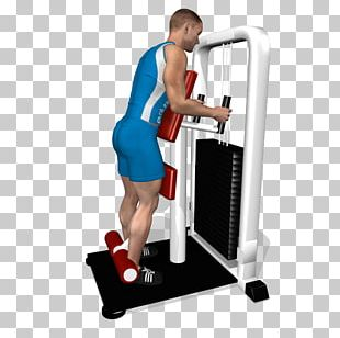 Leg Curl Biceps Femoris Muscle Femur Knee PNG