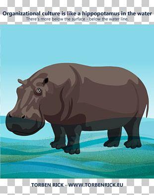 Hippopotamus Rhinoceros Cat Terrestrial Animal Organizational Culture PNG