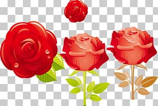 Flower Valentine's Day Rose PNG