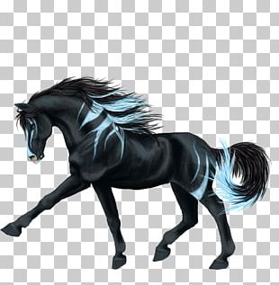 American Paint Horse Mustang Stallion Equestrian Drawing PNG