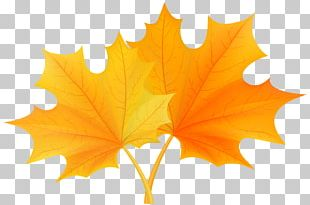 Autumn Leaf Color PNG