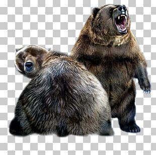 Alaska Peninsula Brown Bear Giant Panda Internet PNG