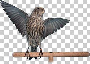 Bird Beak Feather Domestic Canary Lizard PNG
