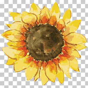 Common Sunflower Gift Pin-back Button Zazzle PNG