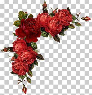 Floral Design Flower Rose Red PNG