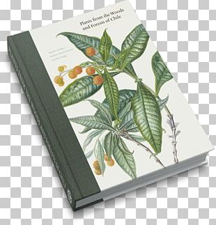 Royal Botanic Garden Edinburgh Plants From The Woods And Forests Of Chile Botany Botanical Illustration PNG
