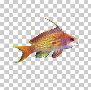 Goldfish Bird Blue-green Chromis Aquariums PNG