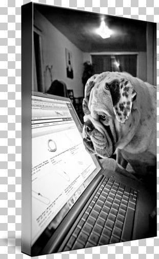 White English Bulldog PNG Images, White English Bulldog