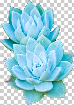 Succulent Plant Cactaceae Garden PNG