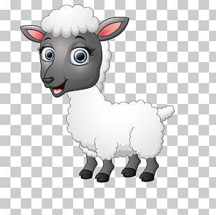 Funny Sheep Goat Illustration PNG