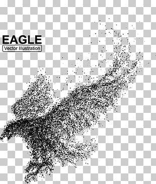 Bald Eagle Bird Illustration PNG