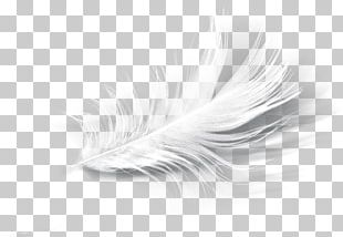 White Feather Eyelash PNG
