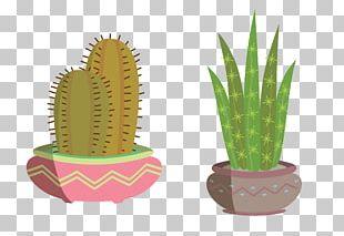 Cactaceae Shutterstock Euclidean PNG