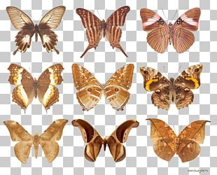 Brush-footed Butterflies Butterflies And Moths Animal 10.Бабочки PNG