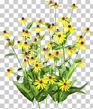 Chrysanthemum Indicum Yellow Flower Chrysanthemum Tea Color PNG