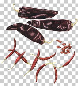 Chile De árbol Pasilla Cayenne Pepper Chili Pepper Capsicum Annuum PNG
