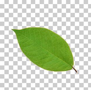 Leaf Apple High-definition Television PNG