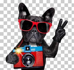 French Bulldog Pug American Bulldog Boxer PNG