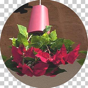 Floral Design Flowerpot Window Box Vase Garden PNG